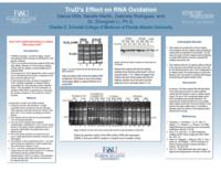 TruD's Effect On RNA Oxidation