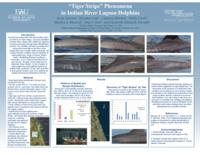 """Tiger Stripe"" Phenomena in Indian River Lagoon Dolphins"