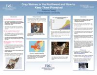 Gray Wolves in the Northwest and How to Keep Them Protected