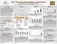 THP-1 Monocyte Differentiation and Activation