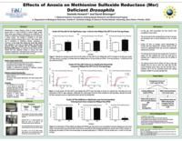 Effects of anoxia on methionine sulfoxide reductase (Msr) deficient drosophila