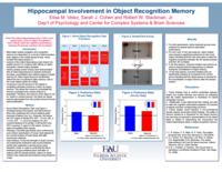 Hippocampal involvement in object recognition memory