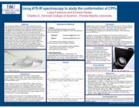 Using ATR-IR spectroscopy to study the conformation of cell-penetrating peptides.