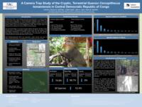 A camera trap study of the cryptic, terrestrial guenon Cercopithecus lomamiensis in central Democratic Republic of Congo