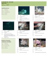 Photo album and taxonomy of benthic macrobiota and fish from 2011-2013 ROV dives on shelf-edge MPAs off southeastern U.S.