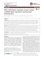 DNA methylation regulates mouse cardiac myofibril gene expression during heart development