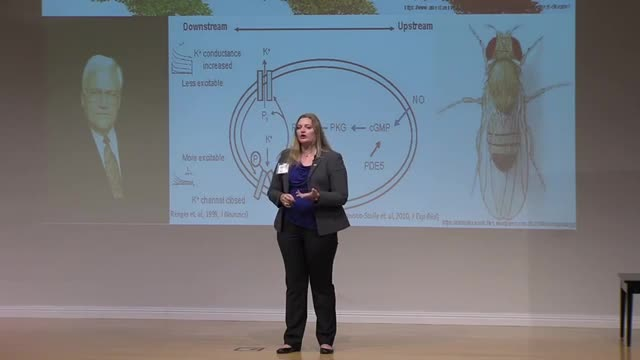 FAU 2016 3MT® Three Minute Thesis Championship First Runner-Up - Stephanie Kelly